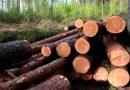 В Україні хочуть відновити експорт лісу-кругляка