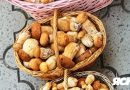 В Ужгороді вже продають літні біли гриби. Назвали ціну