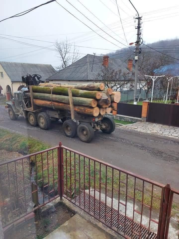 Скандал з лісом. Поліція не спиняє лісовози, бо зацікавлена в цьому. І так щодня