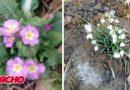 В Ужгороді вже цвітуть весняні квіти