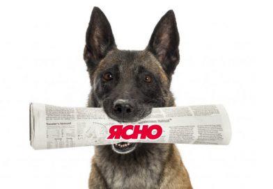 Собака закарпатки приносить газети та може годинами бавитись із ними