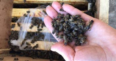 Закарпатська дирекція Укрпошти з'ясовує деталі інциденту з перевезенням бджіл. КОМЕНТАР