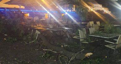 Уночі з ясена Масарика на відвідувачів кафе впала гілка, розміром з велике дерево