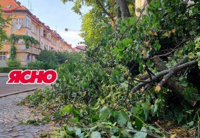 АНОНС. Чому в закарпатських містах дерева масово ідуть під сокиру
